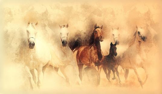 horses-3672611_1920